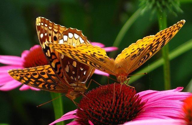 حديقة الفراشات في دبي دبى-%