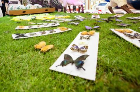 حديقة الفراشات في دبي 7.jpg