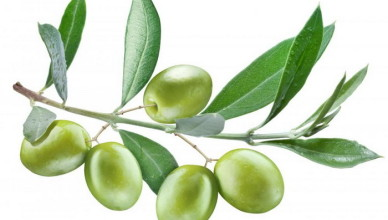 GhadiNewes - Olive leaf4635663256743591296