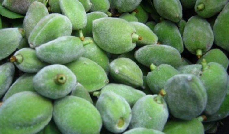 اللوز الأخضر علاج أمراض وقاية